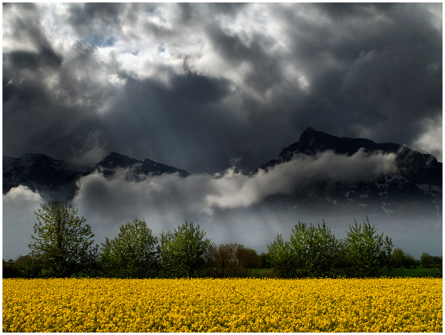 "photo ""Yellow field"" tags: landscape,"