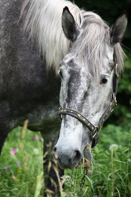 """фото """"Портрет лошади"""" метки: природа, домашние животные"""