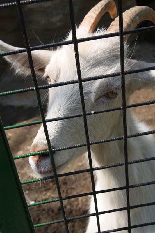 """фото """"Сижу  за решеткой"""" метки: природа, дикие животные"""