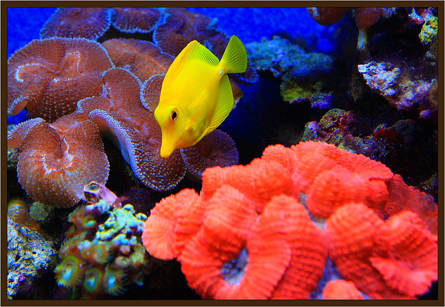 "photo ""Colors of underwater world"" tags: underwater, nature,"