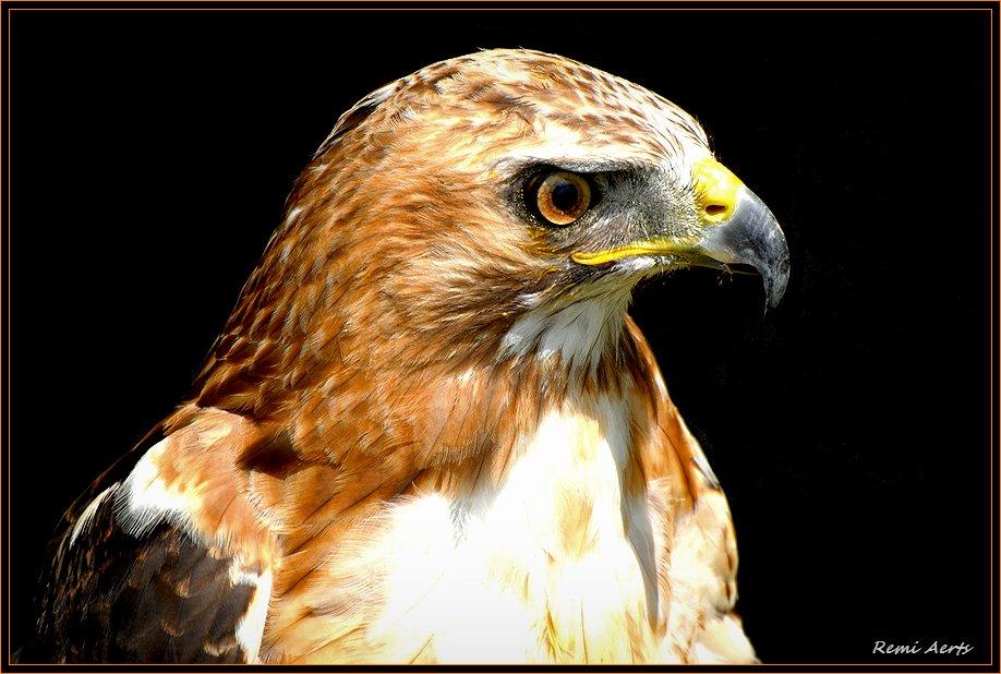 "photo ""beware  pleace !!"" tags: nature, reporting, wild animals"