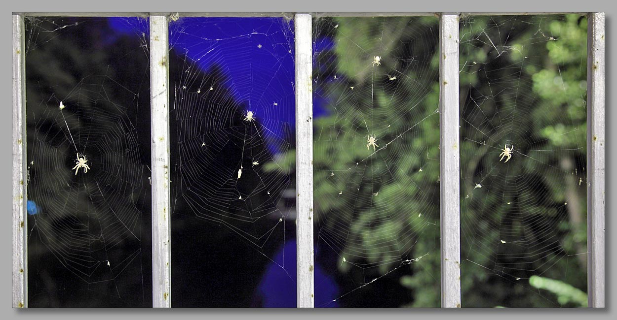 "photo ""Хозяины миров"" tags: nature, macro and close-up,"