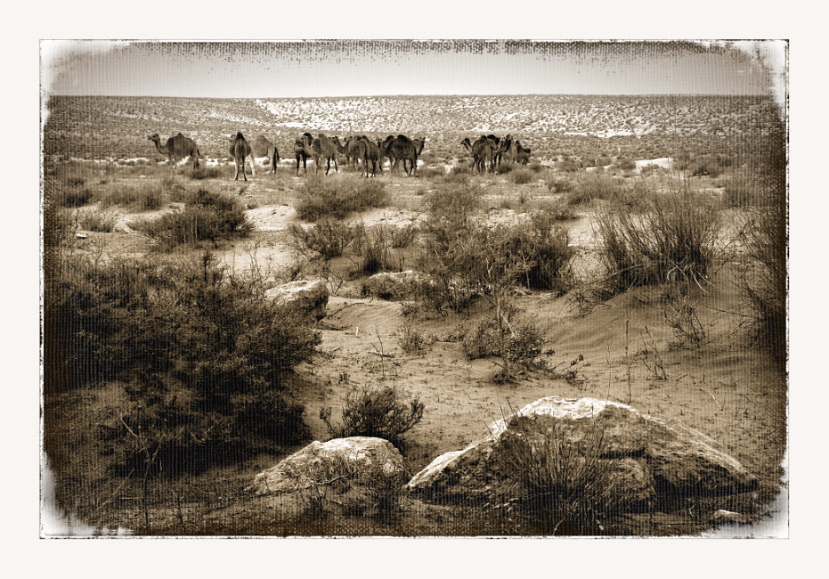 "photo ""Sahara. Dromedarius"" tags: landscape, travel, Africa"