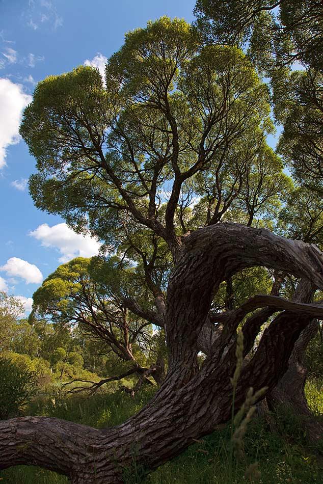 "photo ""fractal"" tags: landscape, misc., forest"