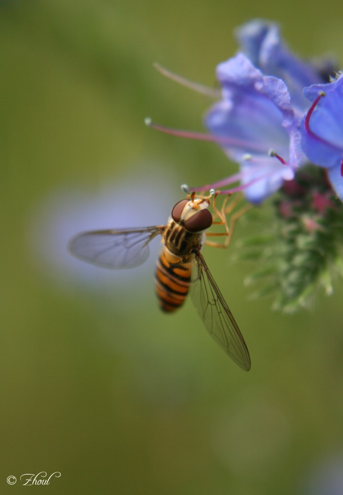 "photo ""Wespe"" tags: nature, insect"