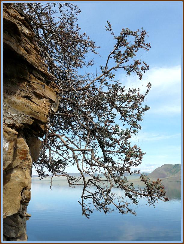 """photo """"tenacity"""" tags: genre, landscape, mountains"""