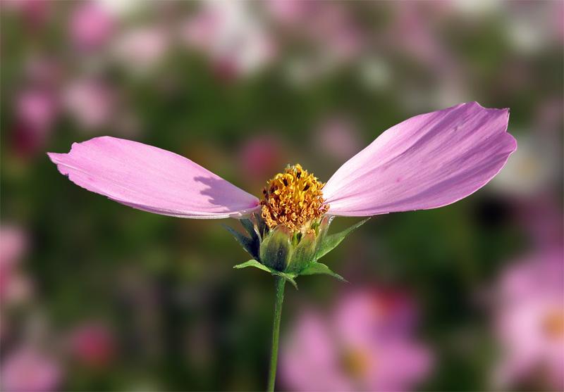 """фото """"Летим!!"""" метки: природа, цветы"""