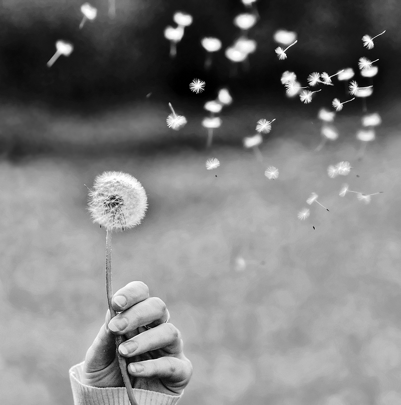"фото ""Fly away"" метки: природа, цветы"