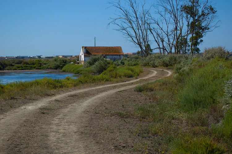 """photo """"THE PATH"""" tags: panoramic, landscape, summer"""