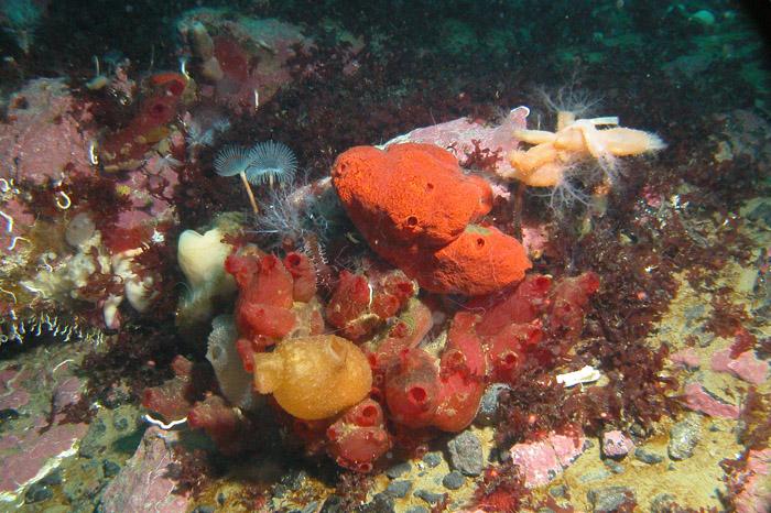"""фото """"Антарктическая палитра"""" метки: природа, подводные, дикие животные"""