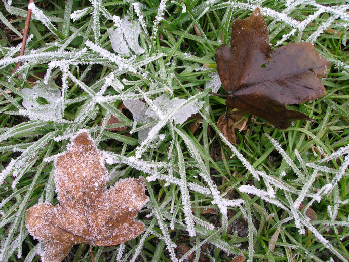 "фото ""hoarfrost & three landscape"" метки: пейзаж, зима"
