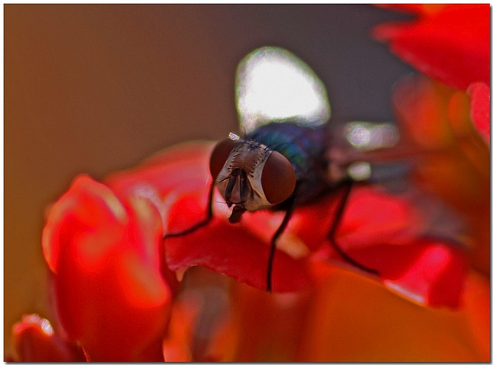 "photo ""Fly In The Ointment"" tags: nature, macro and close-up, insect"