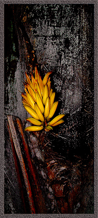 "photo ""Yellow thing at night"" tags: nature, flowers"