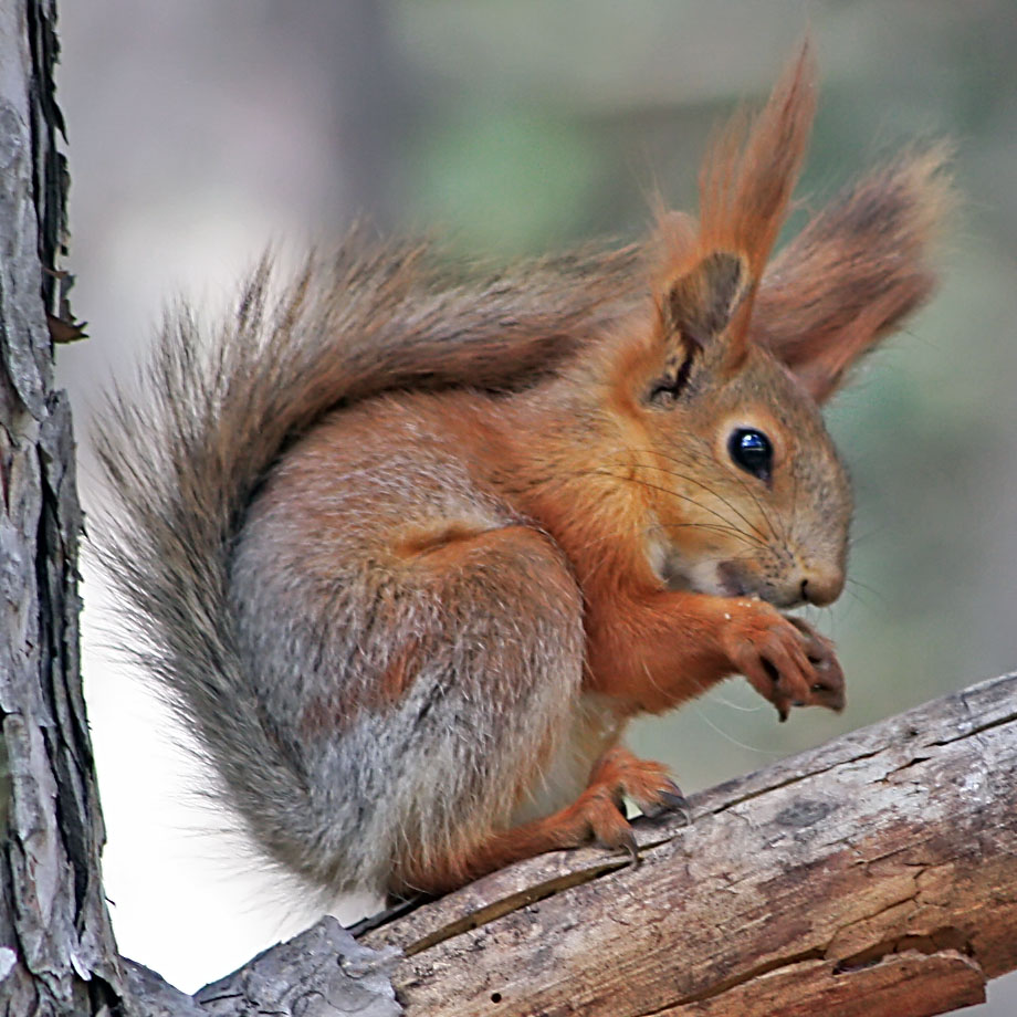"photo ""Squirrel"" tags: nature, macro and close-up, wild animals"