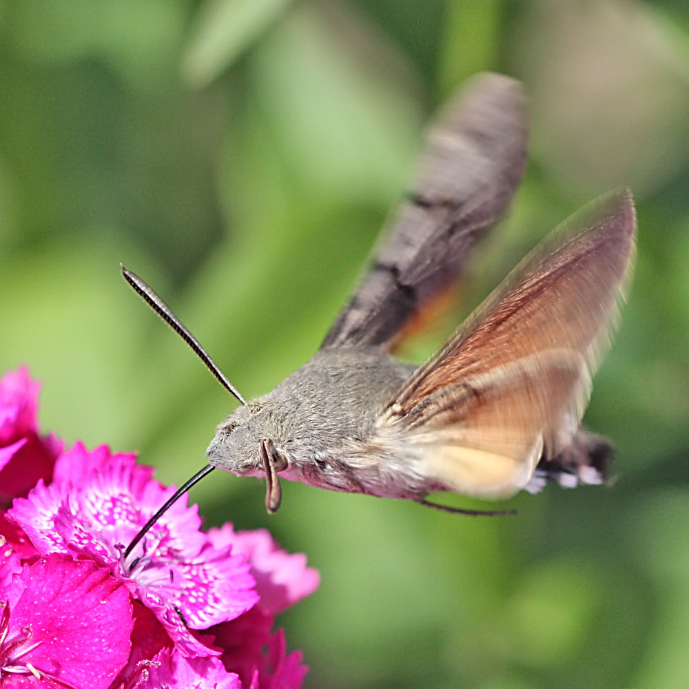 """photo """"Butterfly. Brazhnik"""" tags: nature, macro and close-up, insect"""
