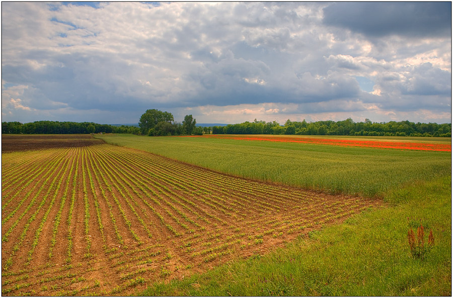 "photo ""Strip farming"" tags: landscape, clouds, summer"
