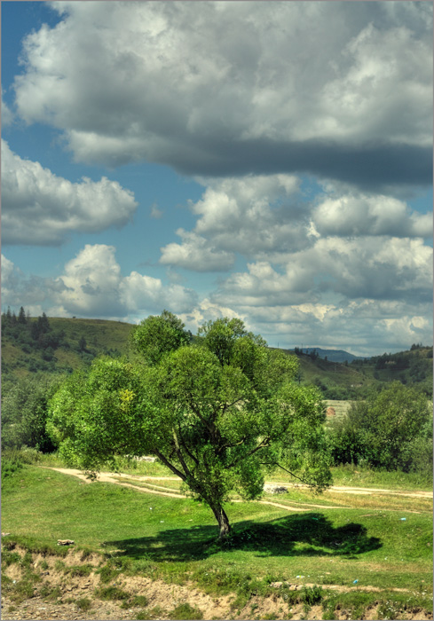 "фото ""облачное дерево"" метки: пейзаж, облака"