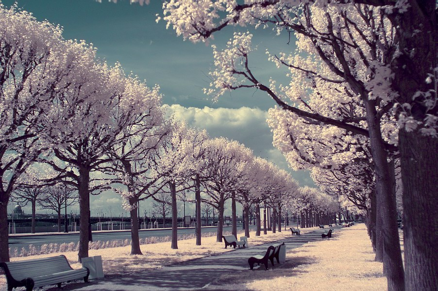 """фото """"С.Петербург"""" метки: пейзаж,"""