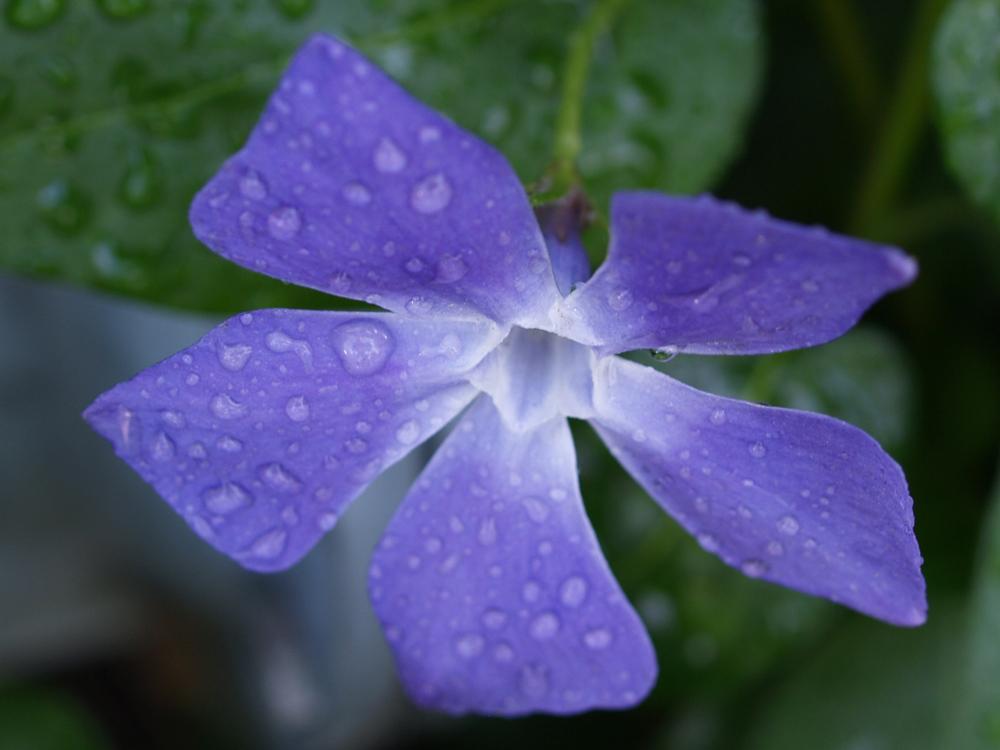 "фото ""Purple Beauty"" метки: пейзаж, природа, лето, цветы"