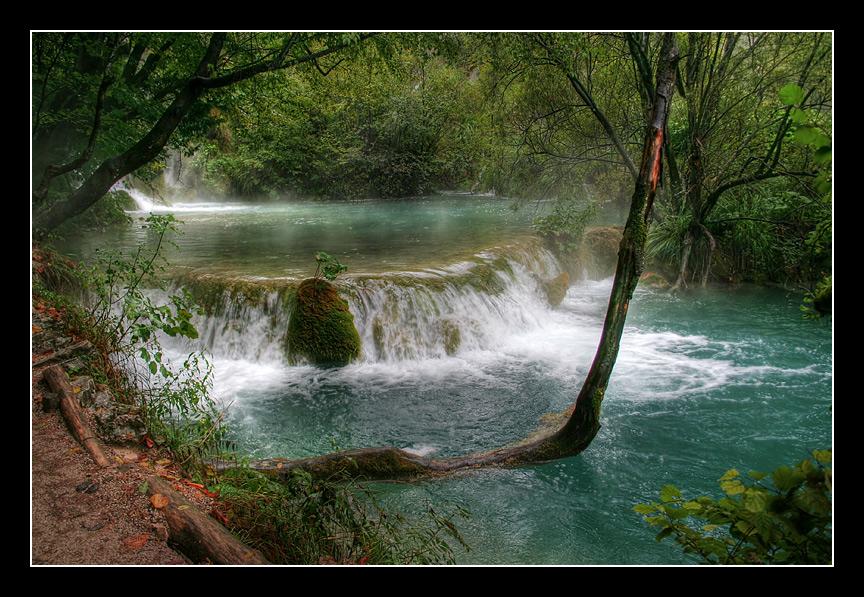 "фото ""Редкое дерево дорастет до середины реки"" метки: пейзаж,"