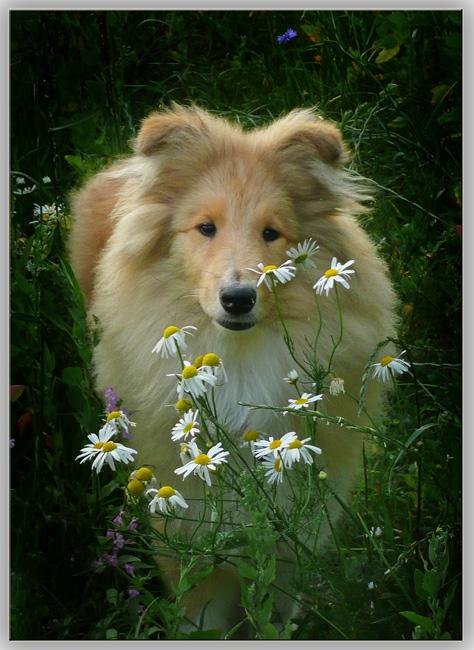"""фото """"Все псы попадают в Рай"""" метки: природа, дикие животные"""