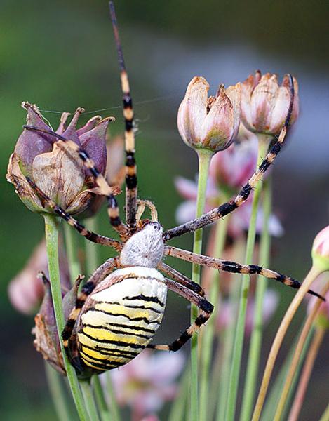 """фото """"Нарву цветов и подарю букет…"""" метки: макро и крупный план, природа, насекомое"""
