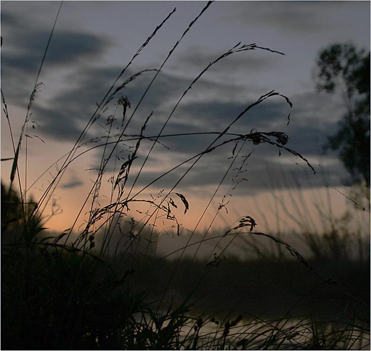 """фото """"Ночь"""" метки: пейзаж, лето, ночь"""