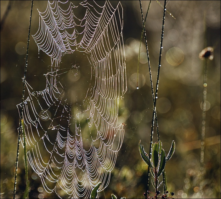 "photo ""morning web"" tags: nature, landscape,"