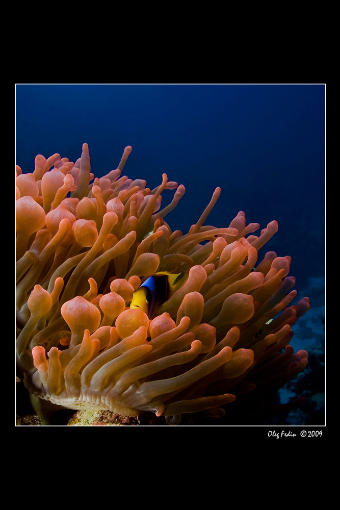 "photo ""***"" tags: underwater,"