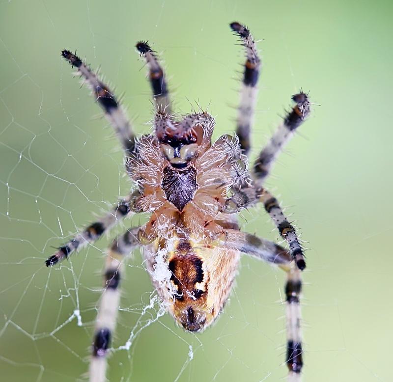 """фото """"Кто на новенького?"""" метки: природа, макро и крупный план, насекомое"""