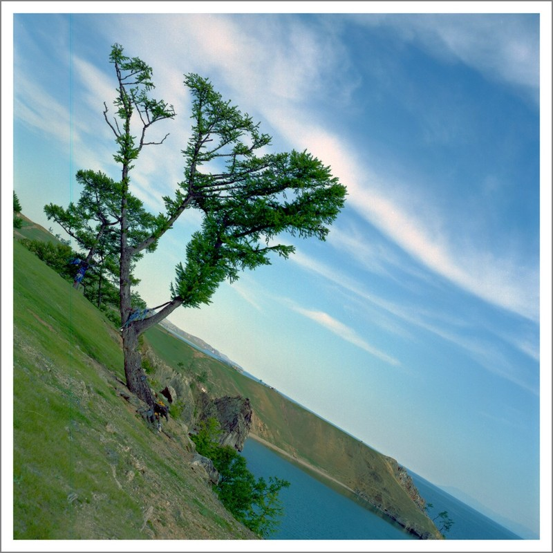 "photo ""Olkhon, Khuzhir, The Tree"" tags: landscape, summer"