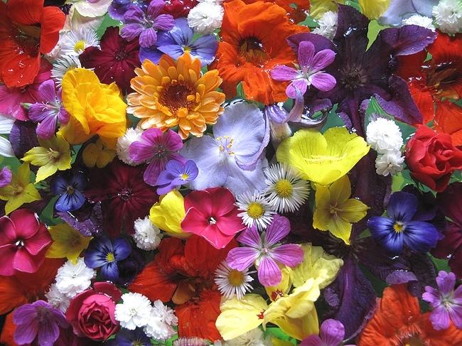 "фото ""Привет, август!"" метки: природа, цветы"