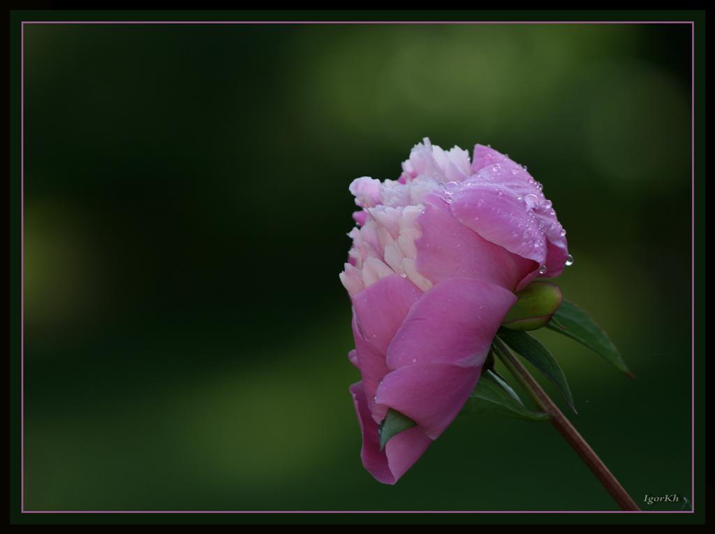 """фото """"***"""" метки: природа, цветы"""
