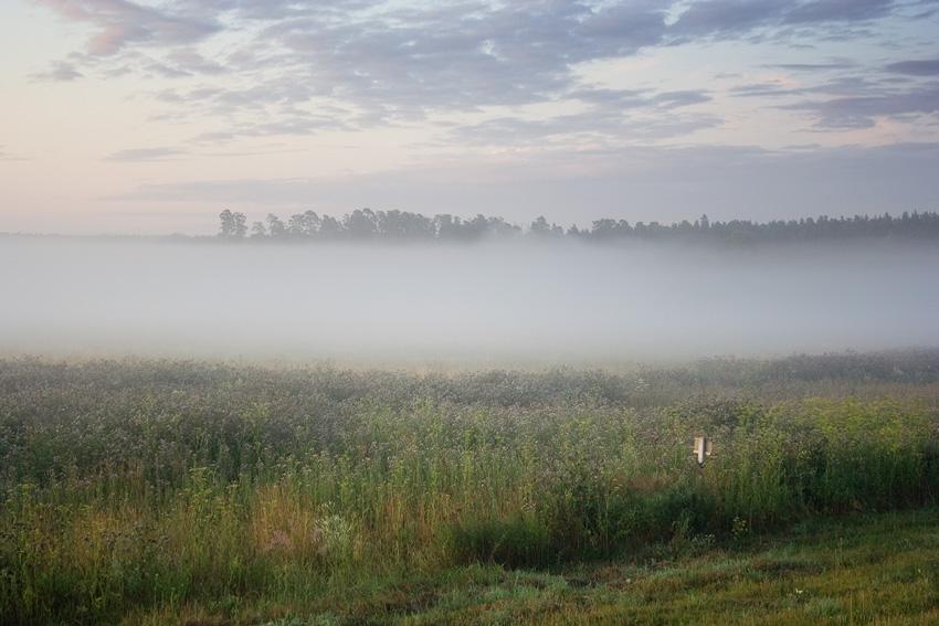 """фото """"Утренняя с туманом"""" метки: пейзаж, лето"""