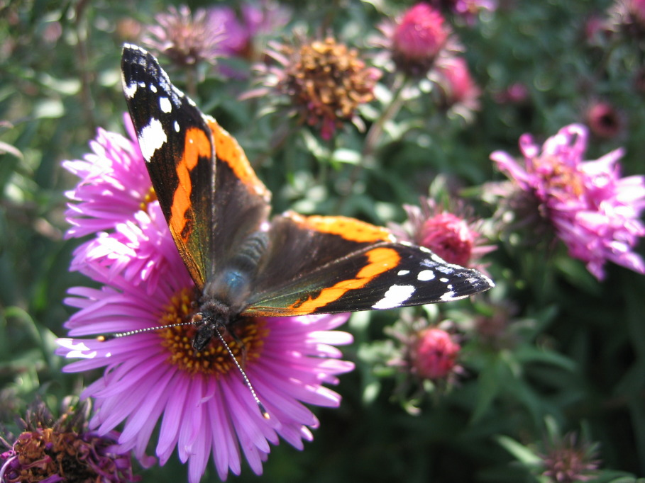 """фото """"Последний солнечный денек"""" метки: природа, насекомое"""