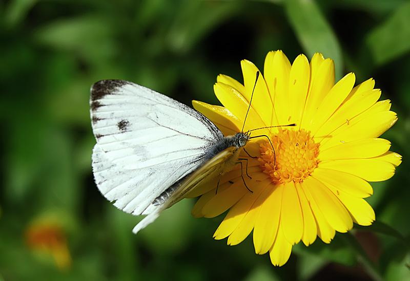 """фото """"."""" метки: природа, макро и крупный план, насекомое"""