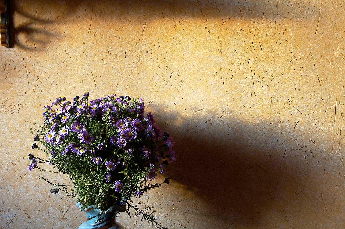 "фото ""***"" метки: природа, натюрморт, цветы"