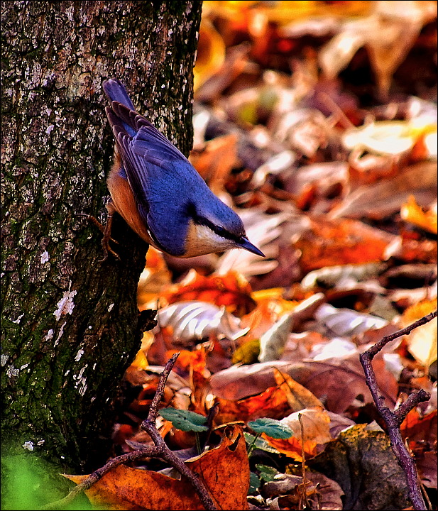 "photo ""Little blue bird"" tags: nature, landscape, forest, wild animals"