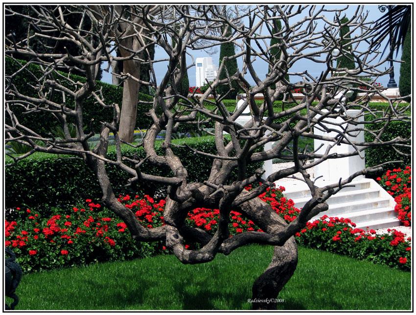 "фото ""Tree of Life"" метки: природа, цветы"