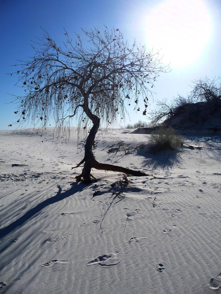 "photo ""White desert sun"" tags: landscape,"