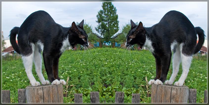"""фото """"Кошачий дуэт"""" метки: природа, домашние животные"""