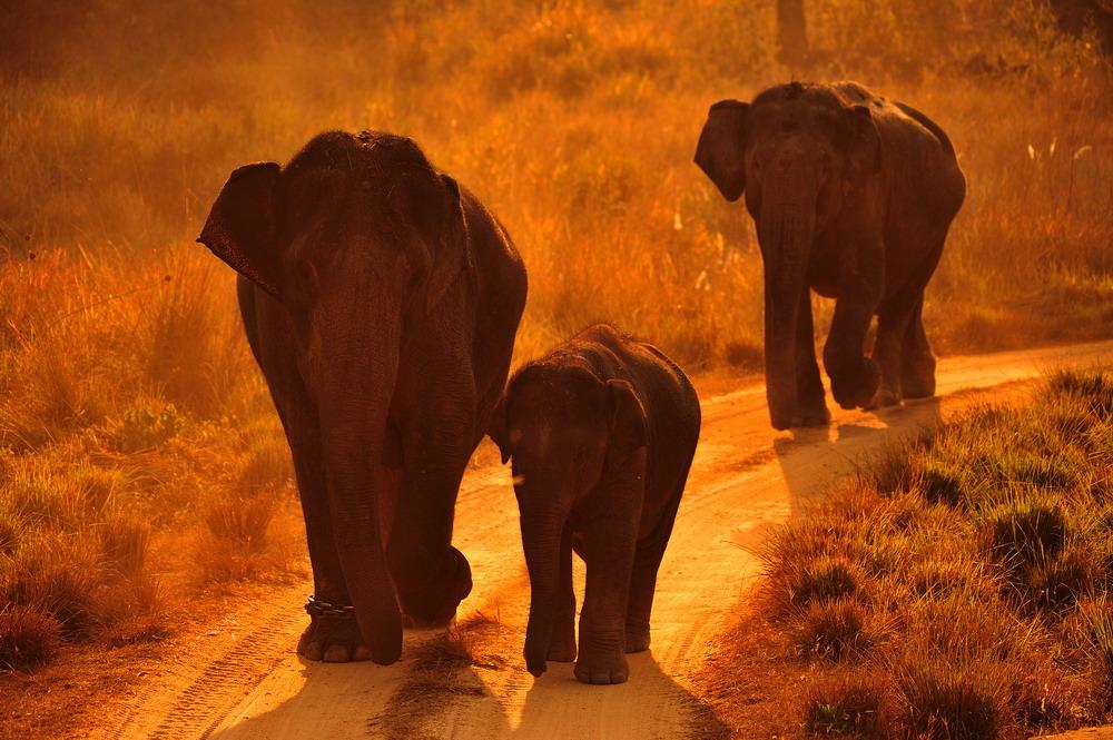 """фото """"Путь домой"""" метки: природа, дикие животные"""