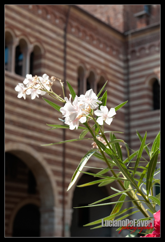 "фото ""Flowers with the history in background"" метки: репортаж,"