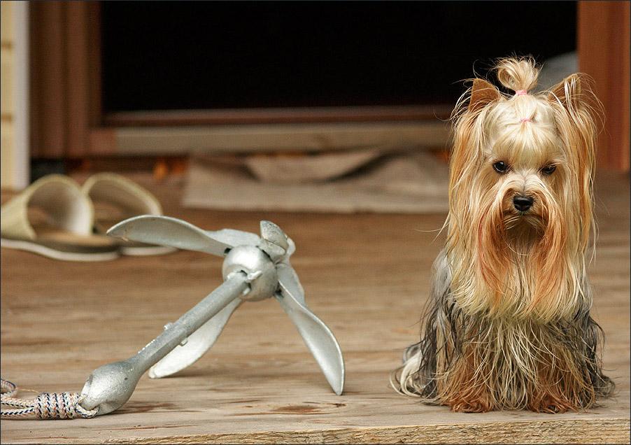 "photo ""Broken Hopes ..."" tags: nature, pets/farm animals"