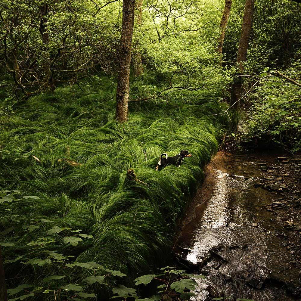 "фото ""It's a strange world"" метки: пейзаж, природа, домашние животные, лес"