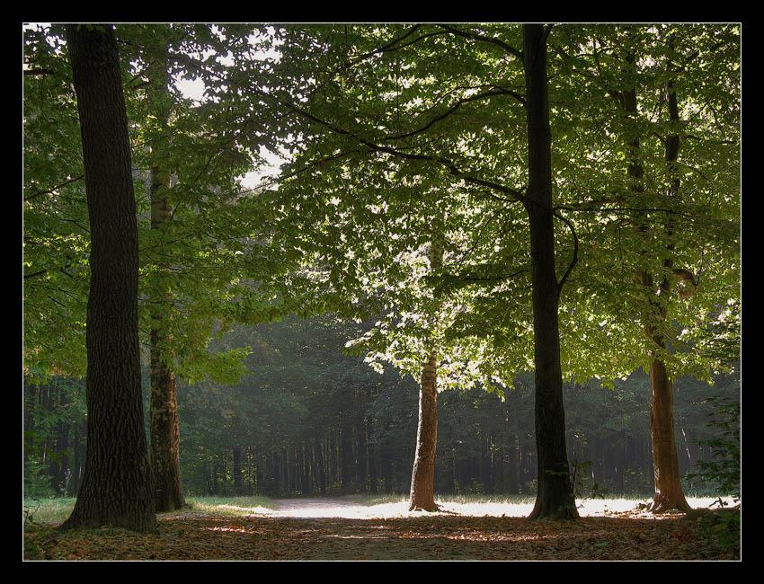 "фото ""Солнечная поляна"" метки: пейзаж, лес, лето"