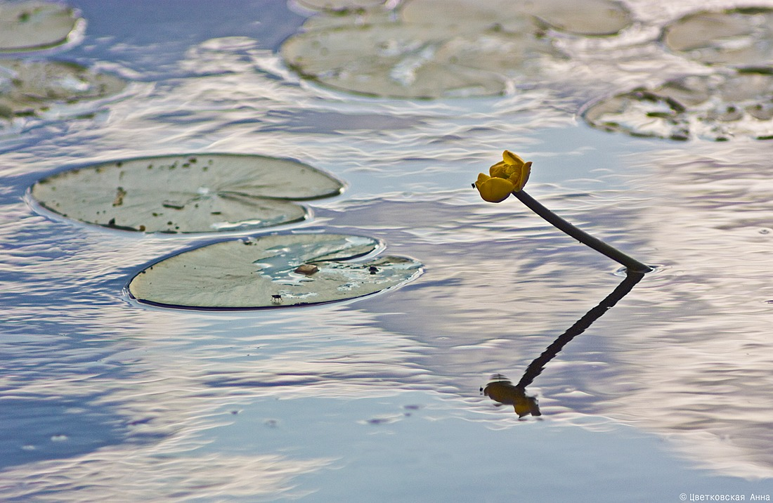 "photo ""***"" tags: nature, abstract, flowers, reflections, water"