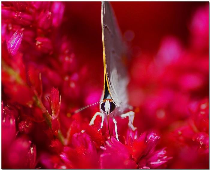 """фото """"Wings Up"""" метки: природа, макро и крупный план, насекомое"""