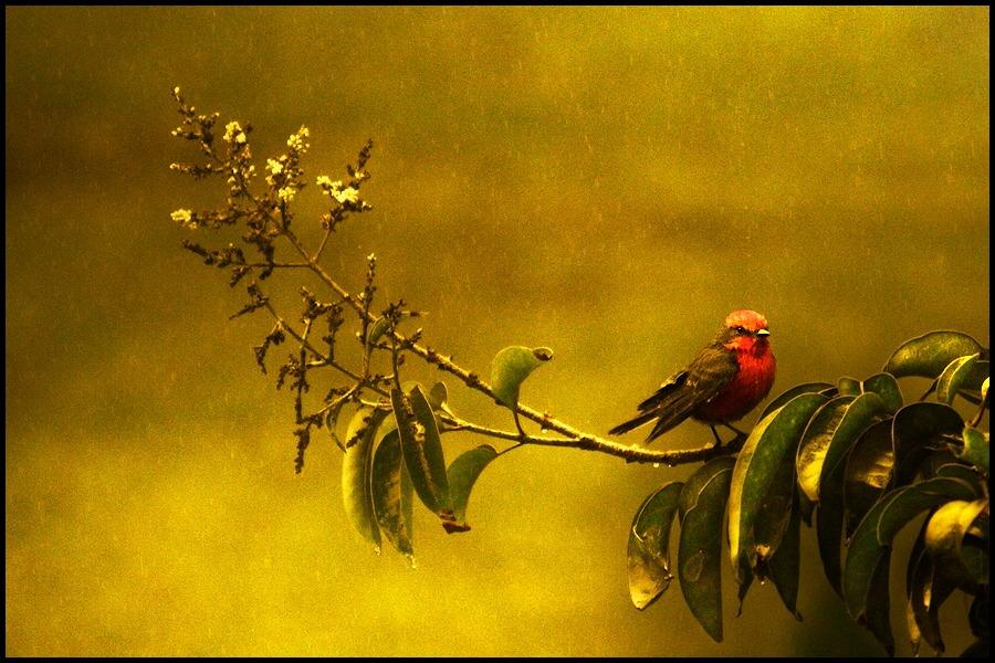 "photo ""rainbow evening"" tags: nature, wild animals"