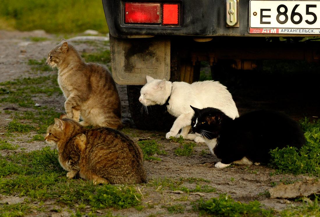 """фото """"Серьезные ребята"""" метки: природа, юмор, домашние животные"""